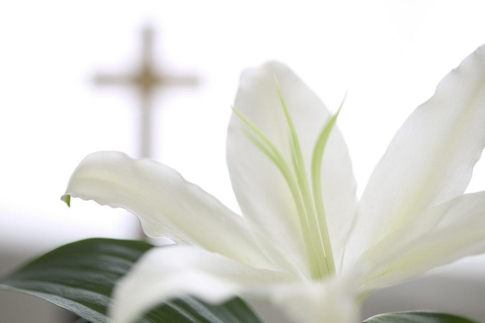 lily cross.JPG