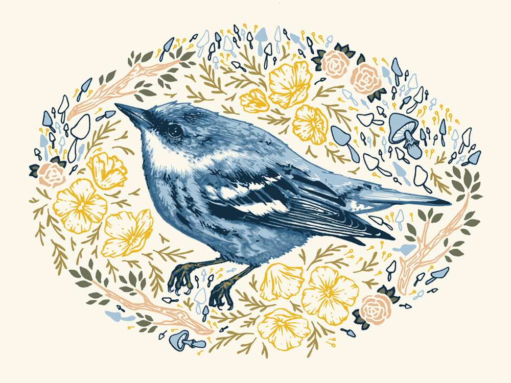 bird_1000_crop.jpg