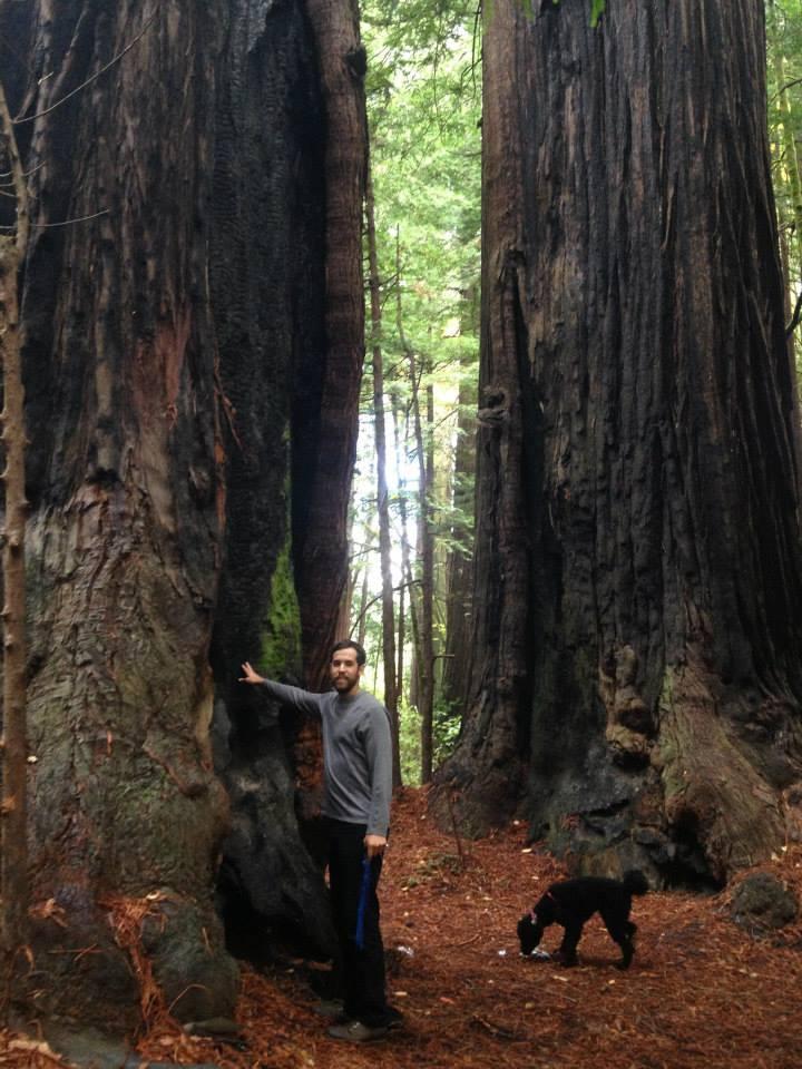 westredwoods.jpg