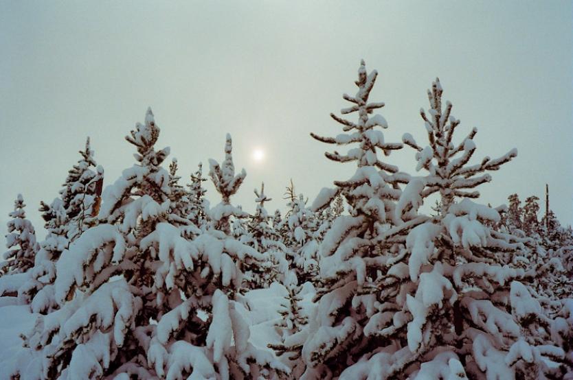 SnowyTress.jpg