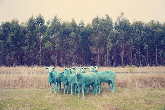 BLUE-SHEEP.jpg