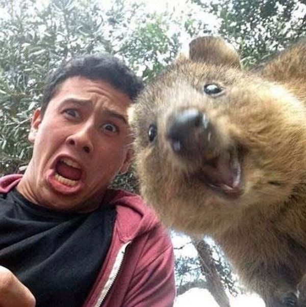 Quokka_Selfies_Meet_the_Worlds_happiest_Animal_on_Instagram_2015_03.jpg
