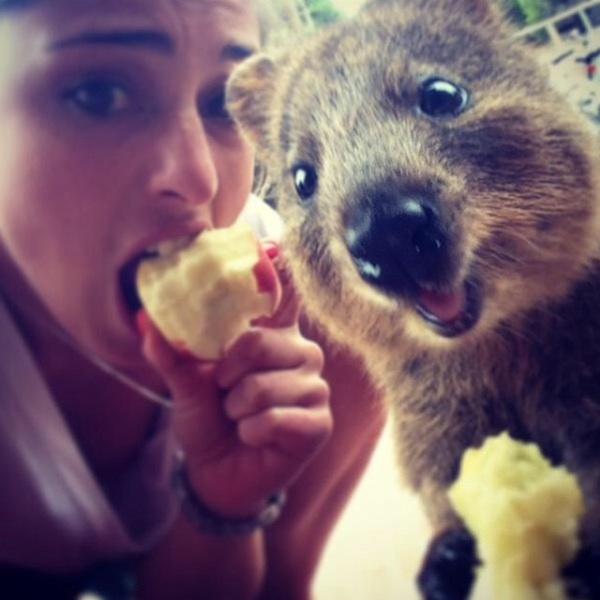 Quokka_Selfies_Meet_the_Worlds_happiest_Animal_on_Instagram_2015_12.jpg