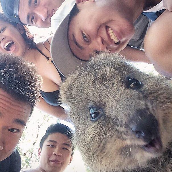 quokka-selfie-trend-cute-rodent-australia-4__605.jpg