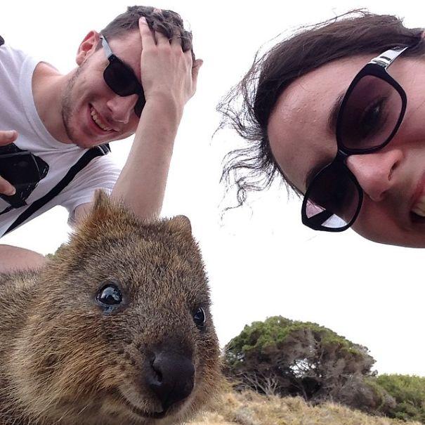 quokka-selfie-trend-cute-rodent-australia-14__605.jpg