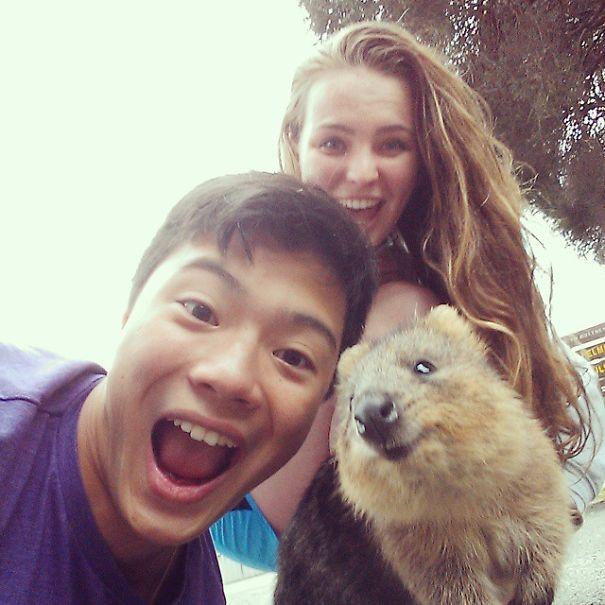quokka-selfie-trend-cute-rodent-australia-21__605.jpg