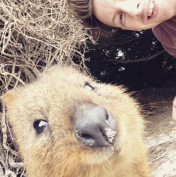 Quokka_Selfies_Meet_the_Worlds_happiest_Animal_on_Instagram_2015_08.png