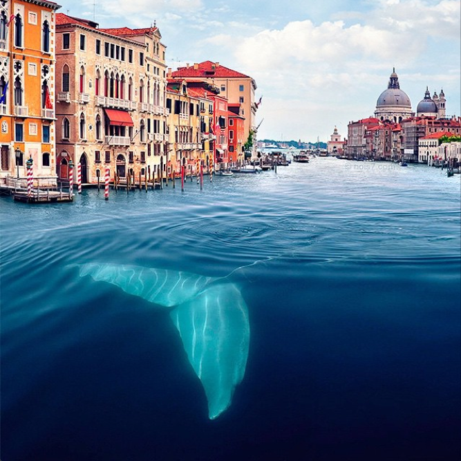 The Whale in Venice Came Up Again
