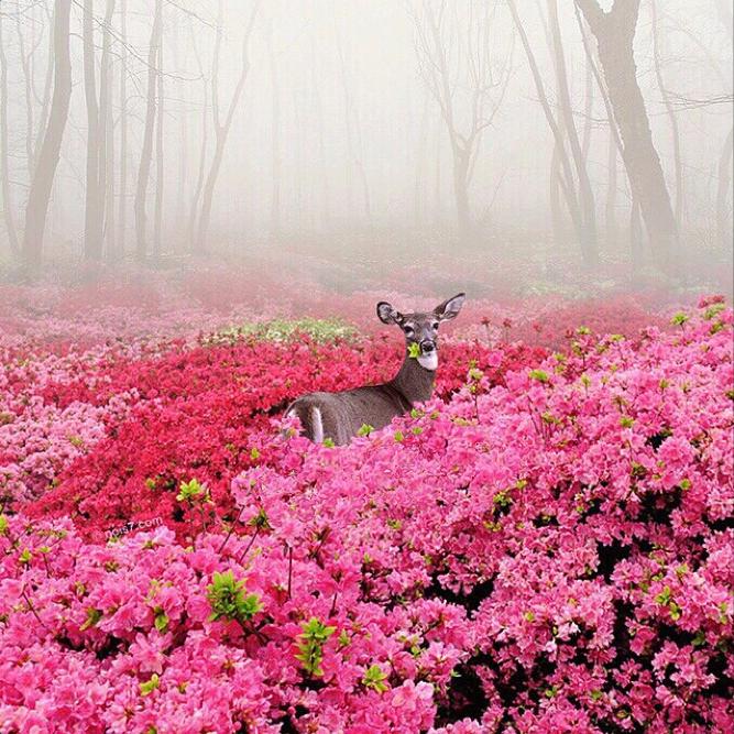 Deer With Pink Flowers
