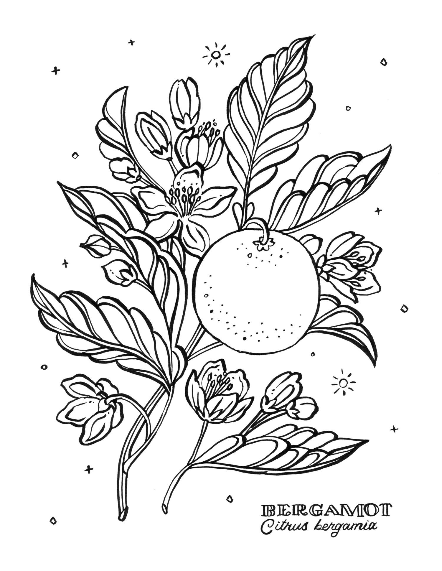 prev next - Botany Coloring Book