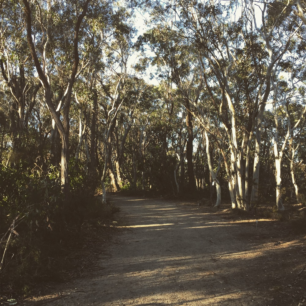 The grounds of my 10 day silent retreat...space, fresh air, (snow!), gumtrees, birds & my own thoughts...