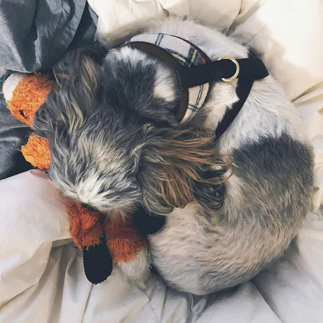 A pup and his fox. 🐶💛🦊