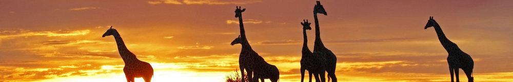 tanzania-banner.jpg