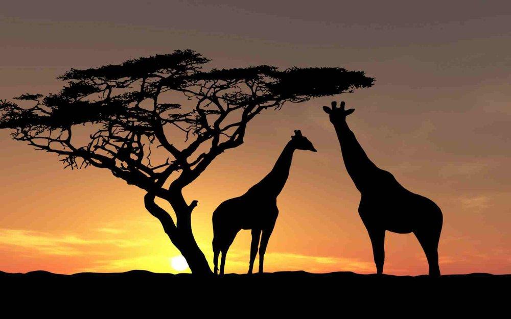 Safari Trip.jpg