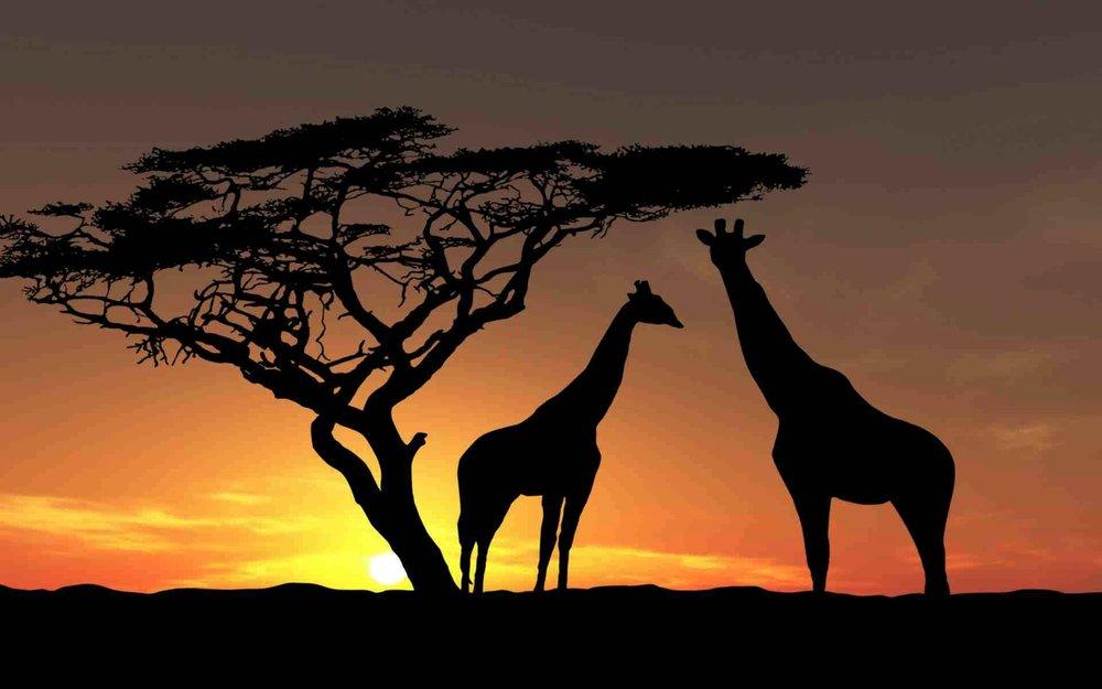 Project Kilimanjaro -