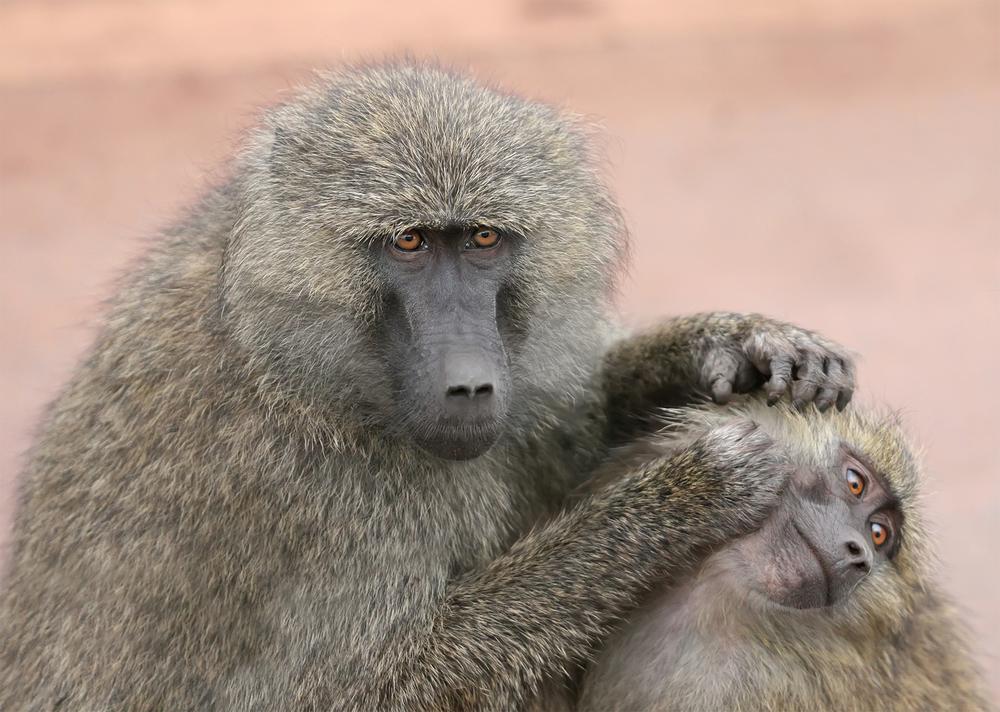 Monkey Love :-)