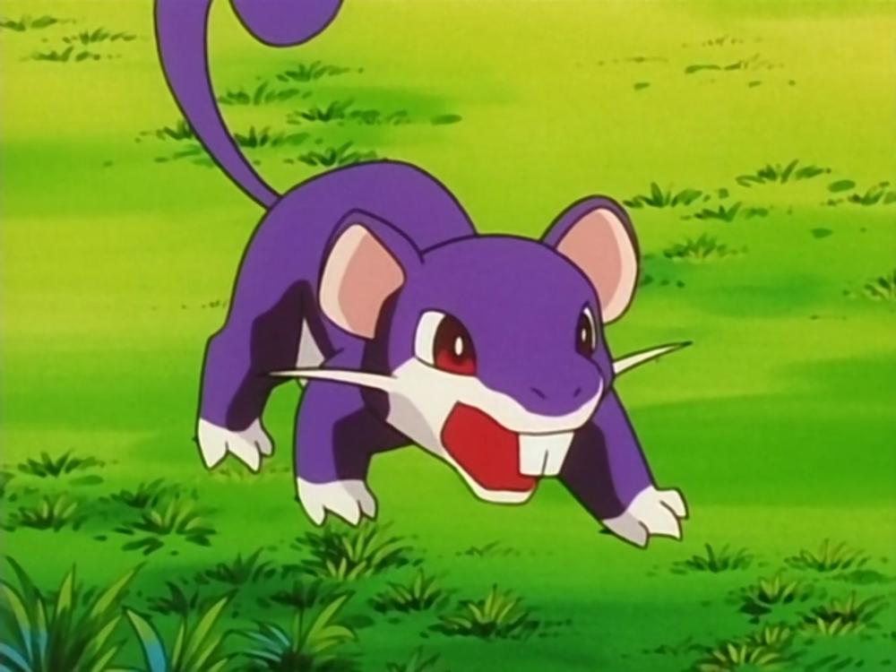 The Pokemon - Rattata