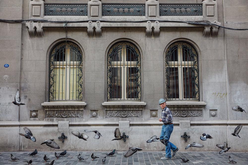 Pigeons_1.jpg