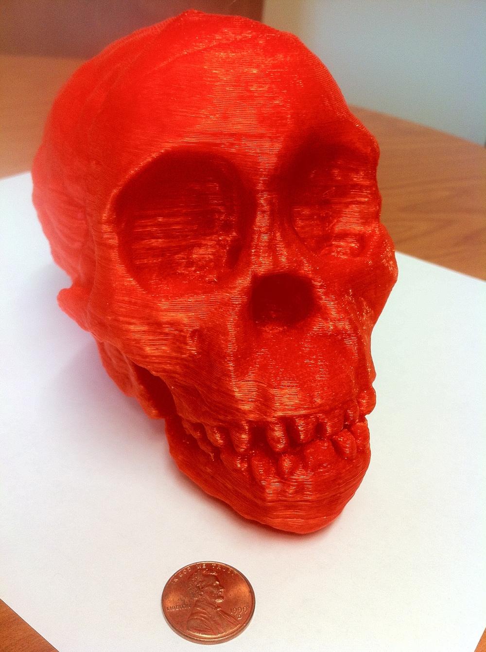 3D printed Australopithecus africanus