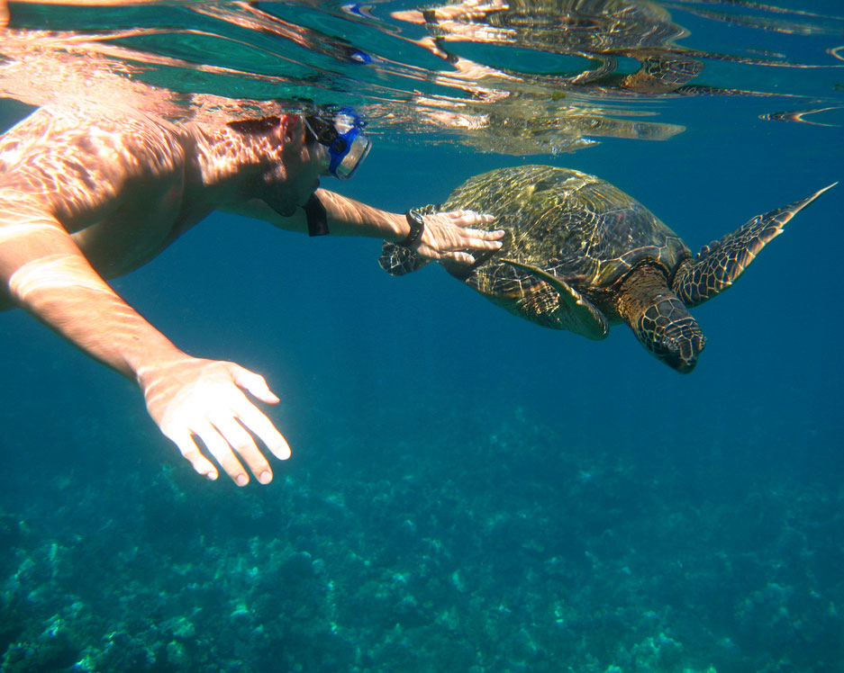 Yes, you will see turtles when you snorkel.