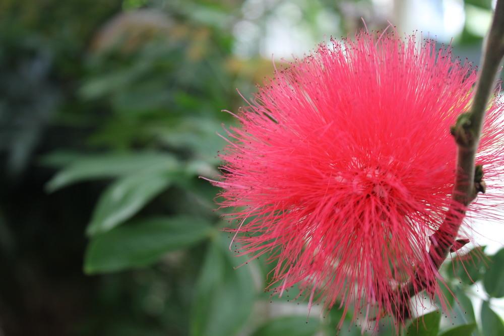 Strange Red Flower