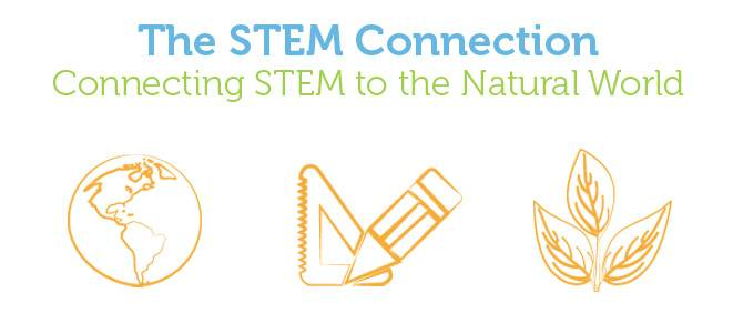 the stem connection.jpg
