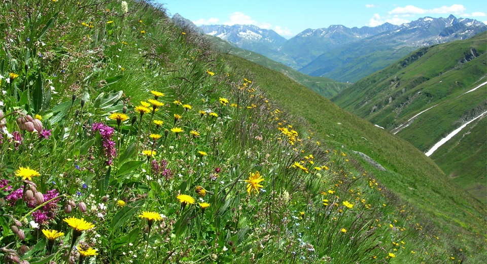 Biodiversity II .jpg