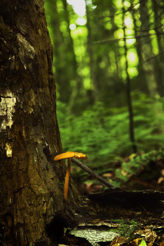 Mushroom_Stump.jpg