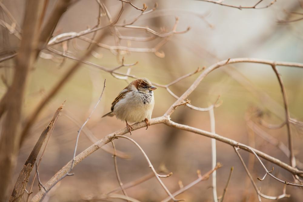 Finch2