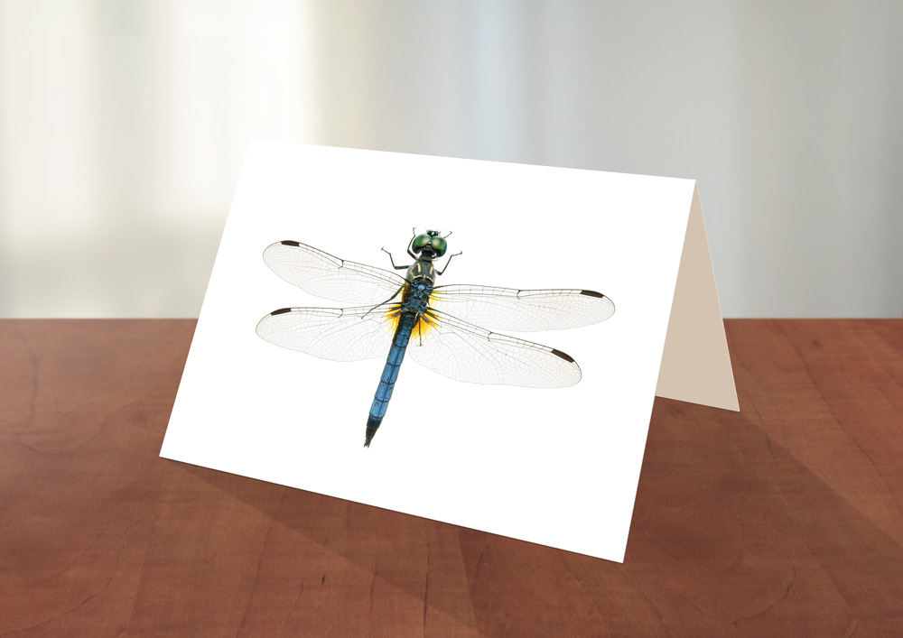 005-Dragonfly-Greeting_card_Sample.jpg