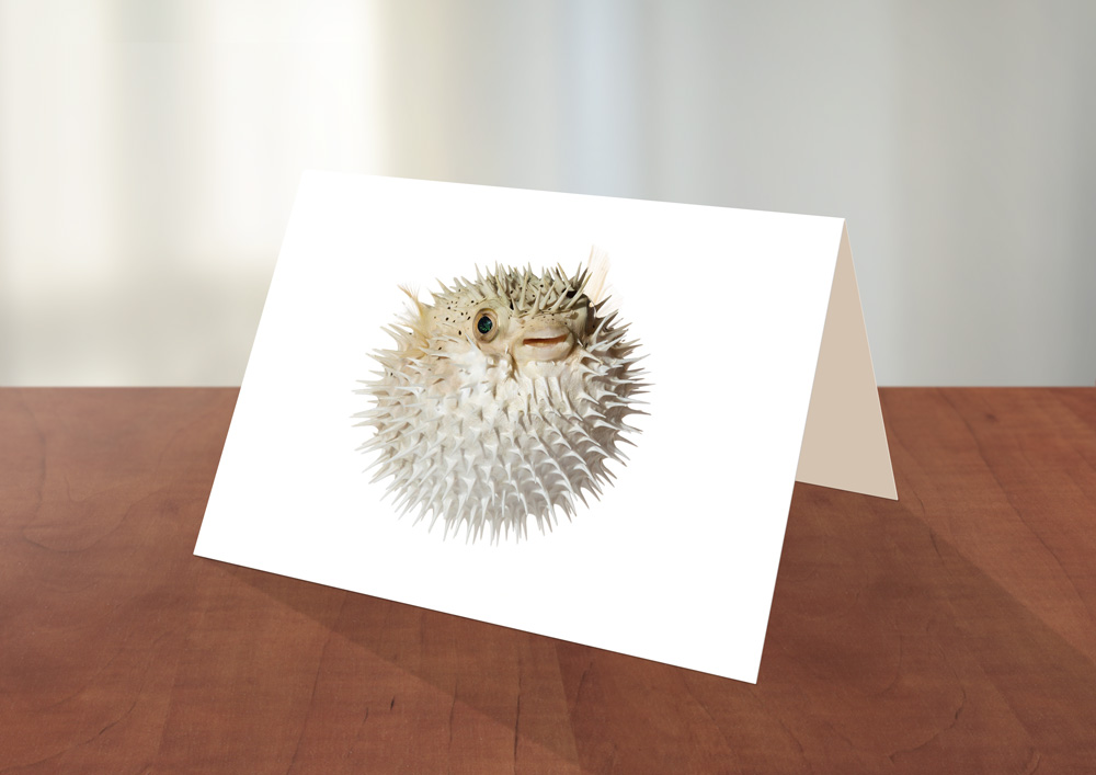 006-Puffer1-Greeting_card_Sample.jpg