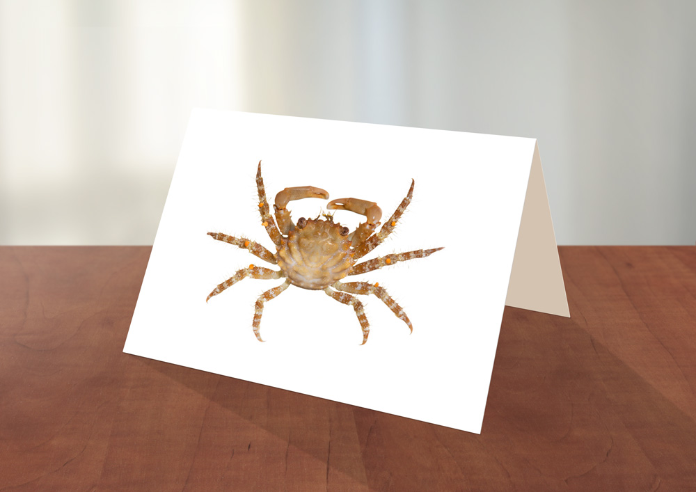 008-Crab1-Greeting_card_Sample.jpg