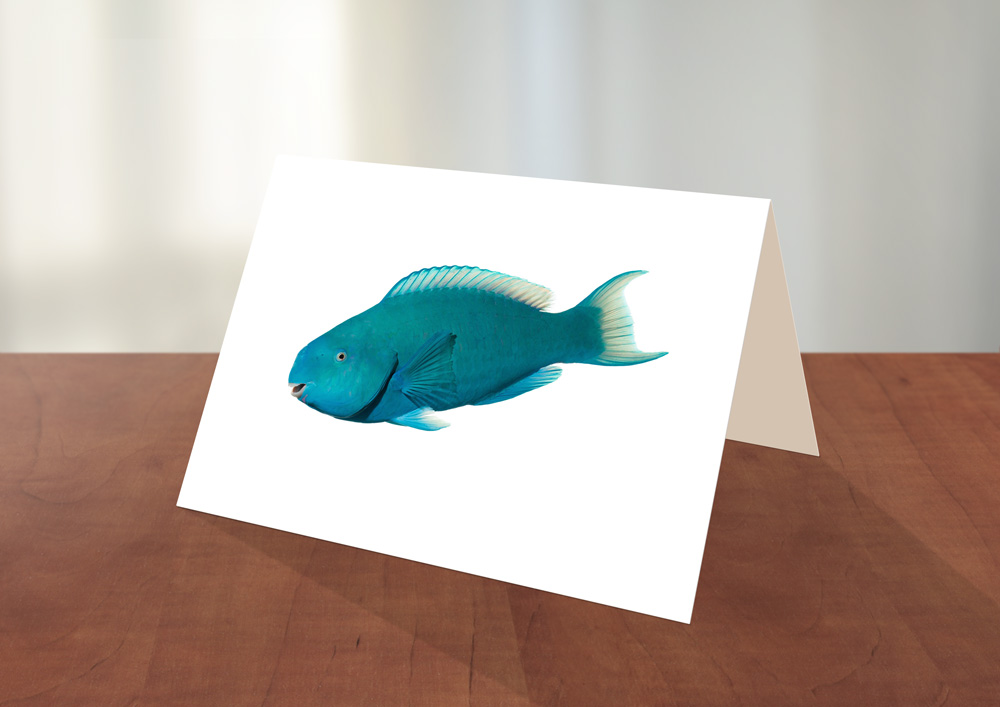 011-Blue-Parrotfish-Greeting_card_Sample.jpg
