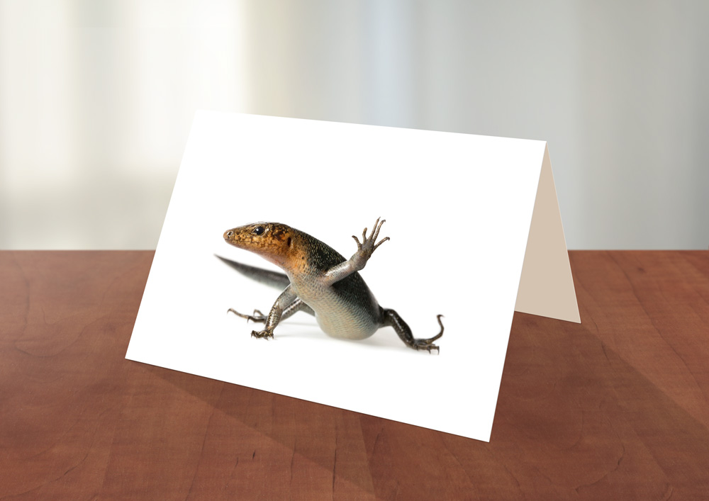 012-Skink-Greeting_card_Sample.jpg