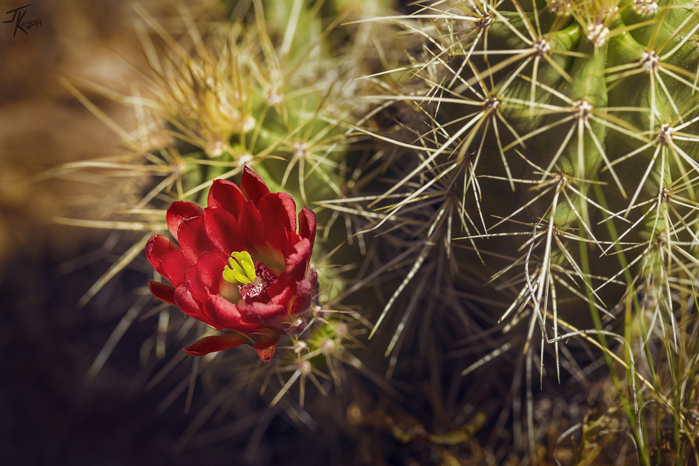 Hedgehog Cactus was one of the species I was able to identify.