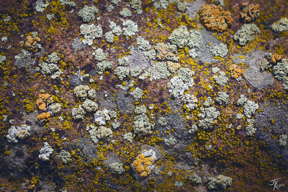 There were at least four different varieties of lichen on the rock.