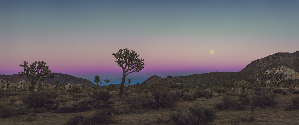 Umbra Moonrise Over Joshua Tree