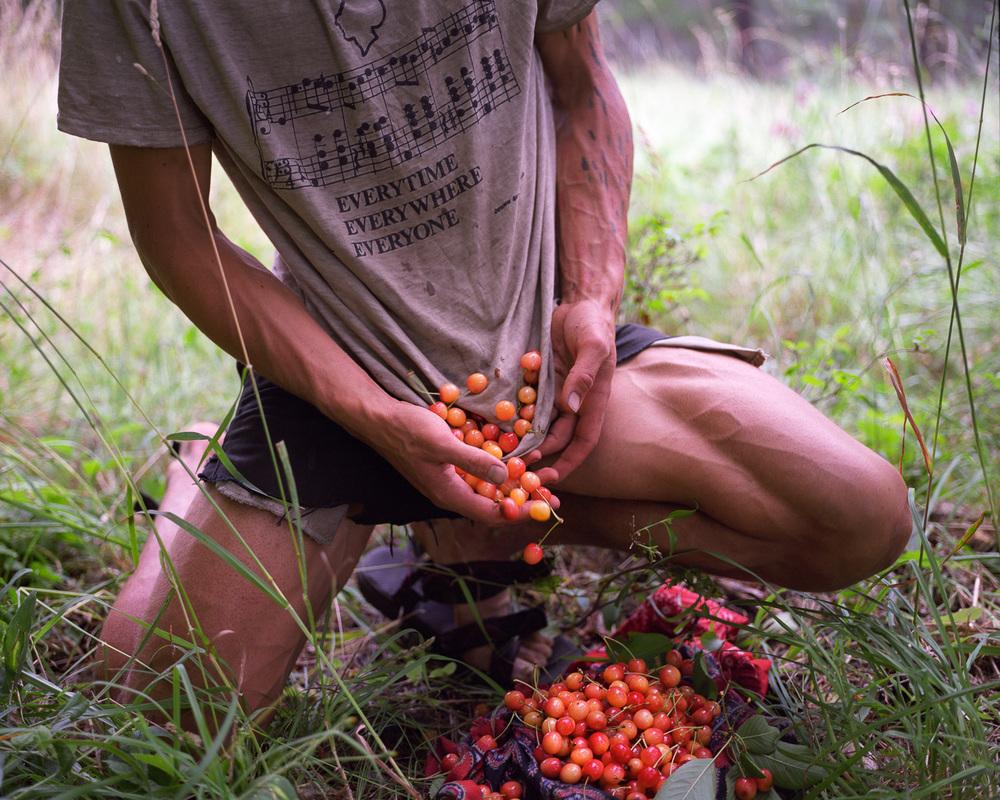 Cherries  © Adrain Chesser
