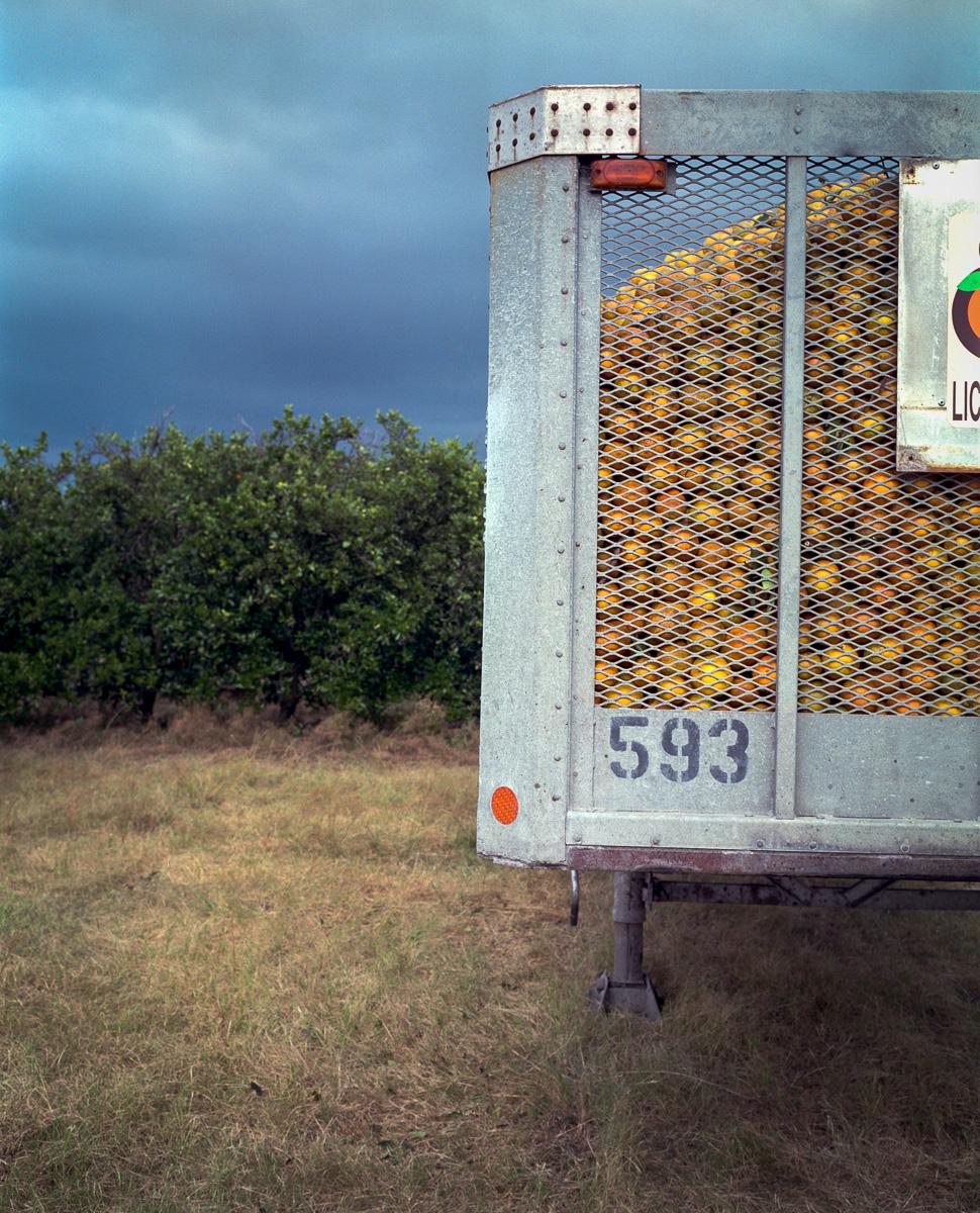 Oranges  © Adrain Chesser
