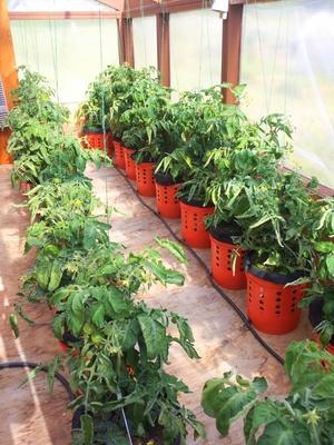 Grow Buckets