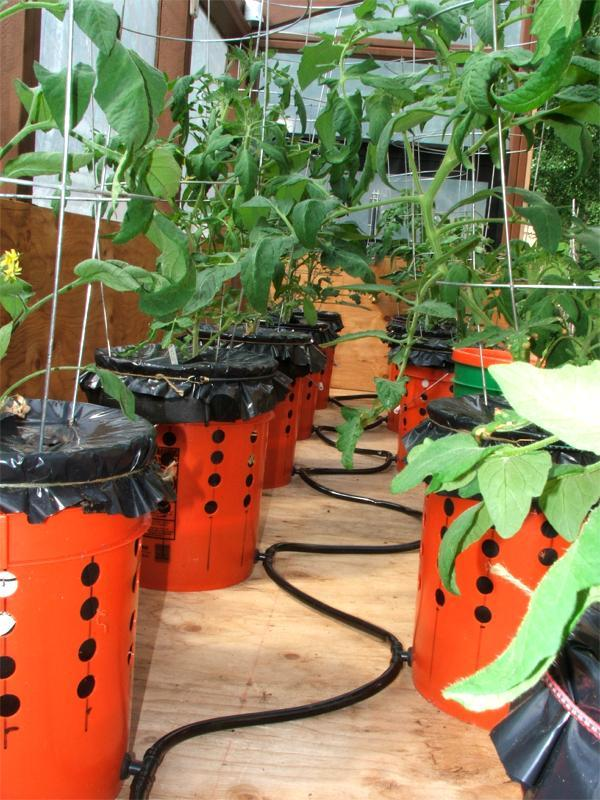 alaska grow buckets 3.jpg