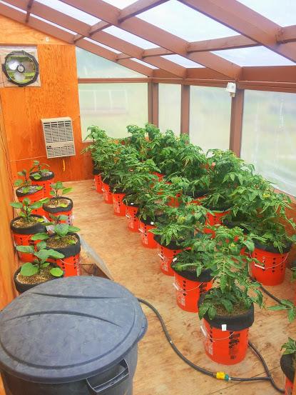 Greenhouse 060814.jpg