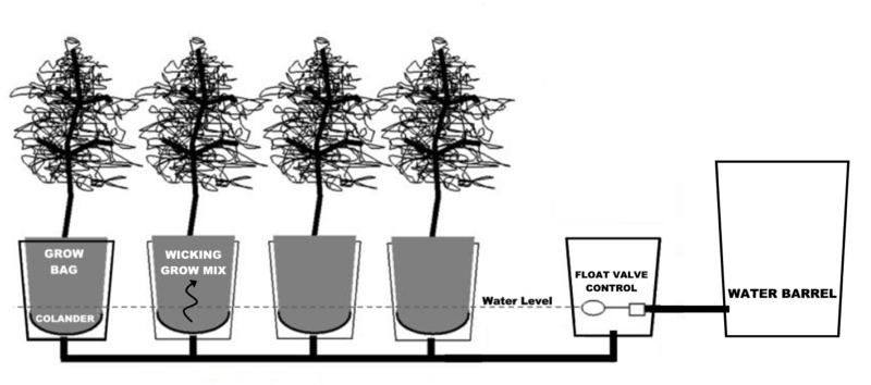 Several Alaska Grow Buckets can be bined into a self watering garden system and connected to a water barrel for automatic irrigation
