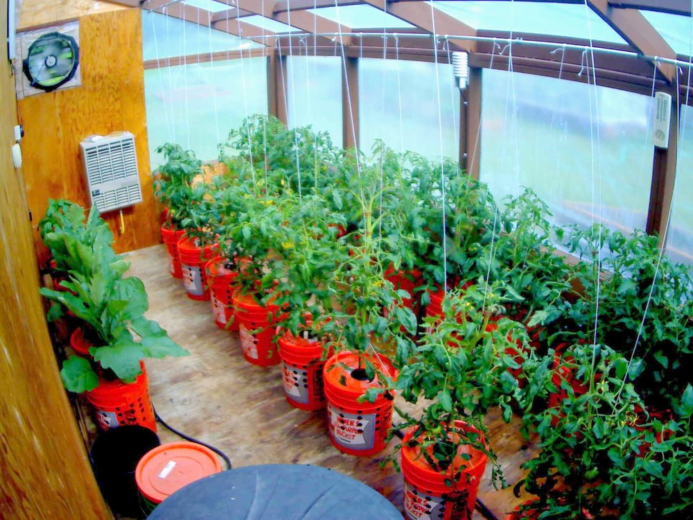 TomatoCam Big 07042016.jpg