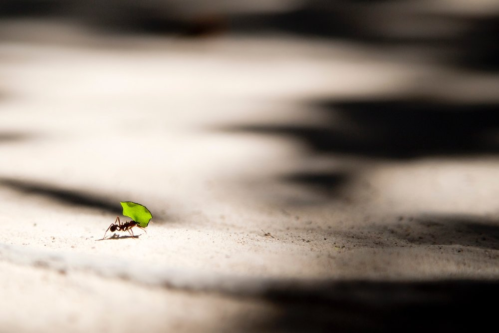 """""""It is not enough to be busy. So are the ants. The question is: What are we busy about?"""" -Henry David Thoreau"""
