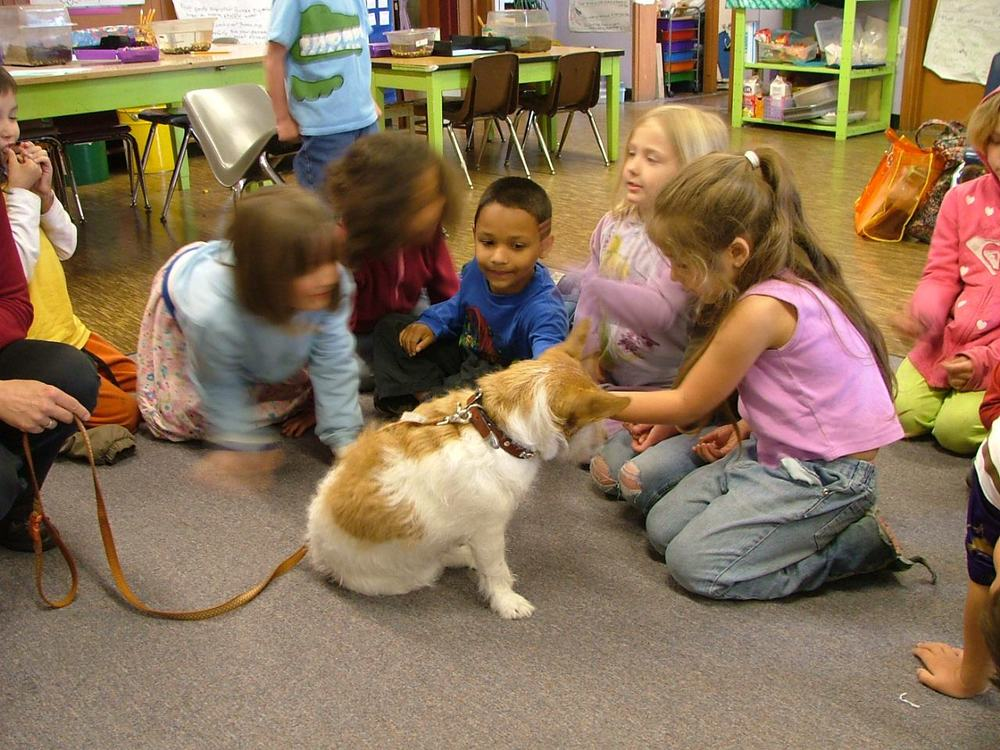 Therapy dog Opie visiting with schoolchildren. Opie is a Jack Russell Terrier.