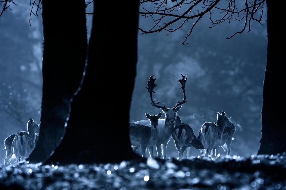 night-life-721.jpg