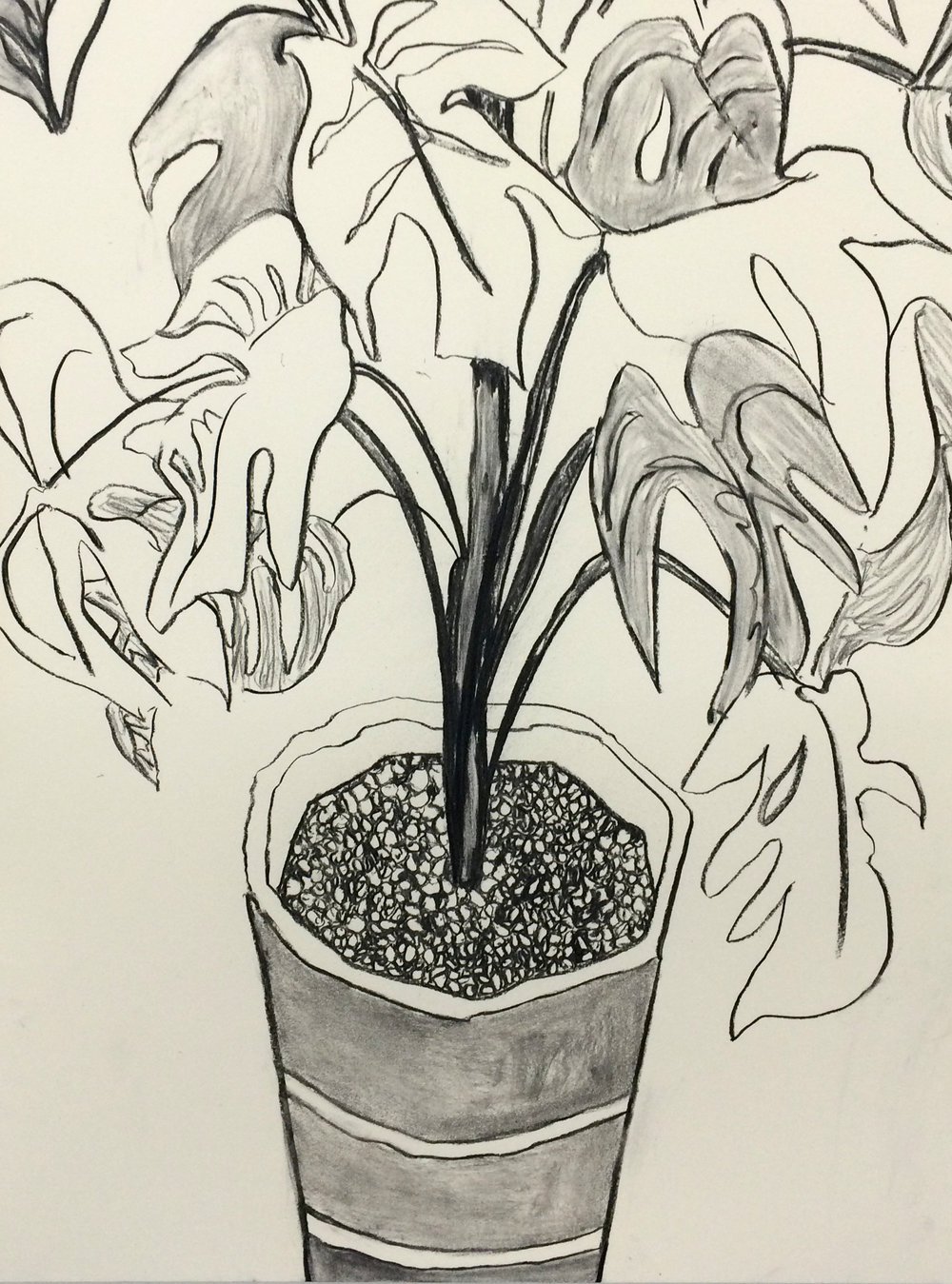 "Plastic Plant, charcoal on paper, 18"" x 24"", 2015"