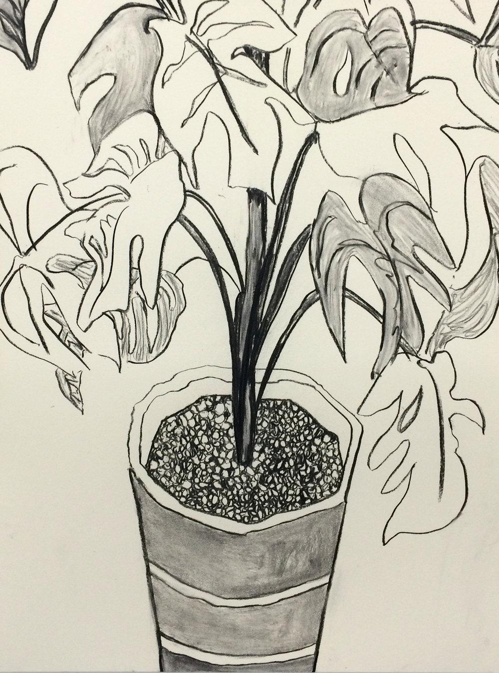 "Plastic Plant, charcoal on paper, 18"" x 24"", 2015"
