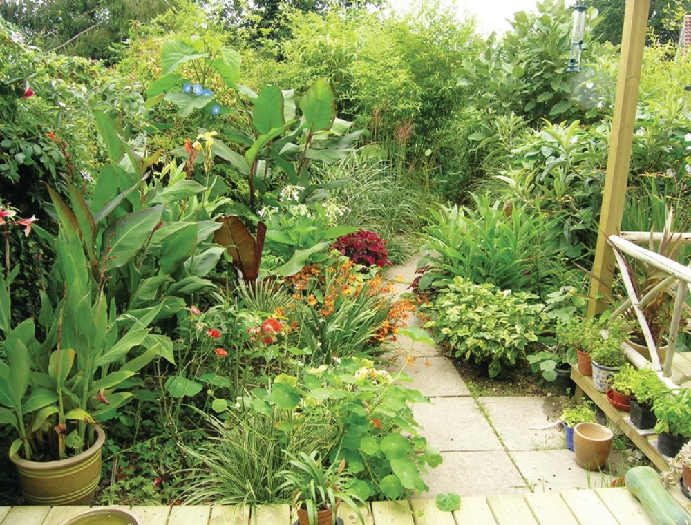 jungle-garden-winner-lindfield.jpg